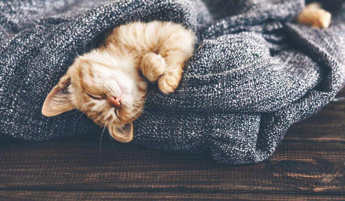 Pet Insurance: Why your fur-baby needs it