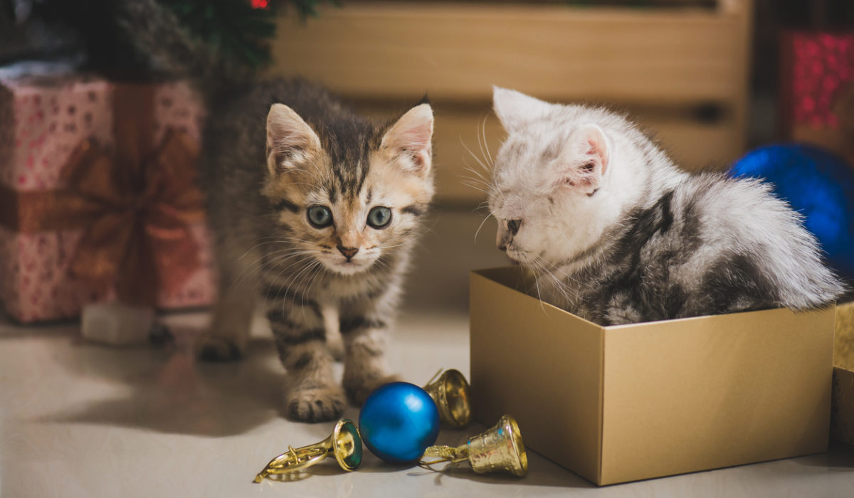This Christmas spoil your Pet with Pet Insurance